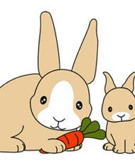 esther-shirt-konijnen